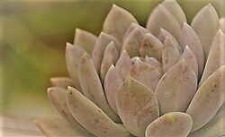 A close-up of a desert succulent.